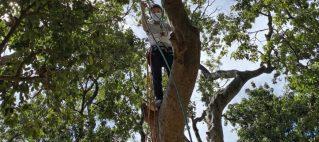發展局推城市林務發展基金資助計劃 培育樹藝師
